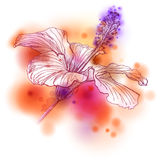Watercolor Flower Hibiscus Stock Photography