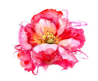 Watercolor flower poppy Royalty Free Stock Photography