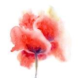 Watercolor flower poppy Stock Photo