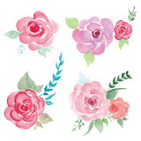 Watercolor flower set illustration. Watercolor illustration of pink flowers Stock Image