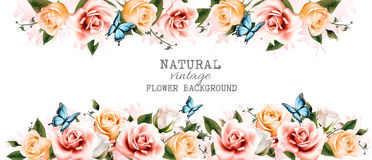 Watercolor flower vintage background with beautiful roses. And butterfliesю Vector Royalty Free Stock Photography