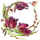 Watercolor flower wreath. With Tulip background Royalty Free Stock Photo