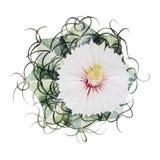 Watercolor flowering cactus Stock Photo