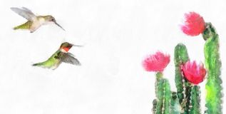 Watercolor Flowering Cactus Isolated On A Pair Of Ruby Throated Hummingbirds Archilochus Colubris And Red Stock Images