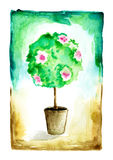 Watercolor flowering tree in a flower pot. Royalty Free Stock Photography