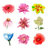 Watercolor Flowers Stock Photography