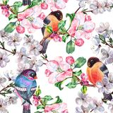 Watercolor flowers apple with bird Bullfinch. Floral seamless pattern on a white background. Watercolor apple  branch  floral seamless pattern design Stock Photo