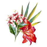 Watercolor flowers Stock Images