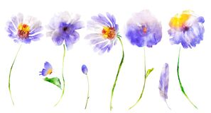 Watercolor flowers, butterfly; bud and feather