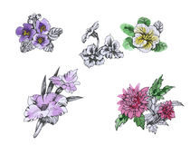 Watercolor flowers in classical style on a white background Royalty Free Stock Photo