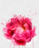 Watercolor flowers collection Stock Images