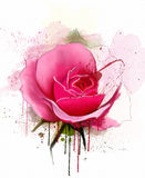 Watercolor flowers collection. The beautiful watercolor rose,  on a white background, with elements of sketch and spray paint Stock Images