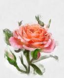 Watercolor flowers collection. The beautiful watercolor rose,  on a white background, with elements of sketch and spray paint Stock Photography