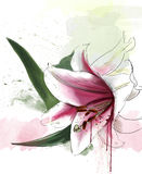 Watercolor flowers collection. Beautiful white Lily close up, with elements of sketch and spray paint, watercolor illustration Stock Photography
