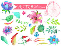 Watercolor flowers collection Royalty Free Stock Image