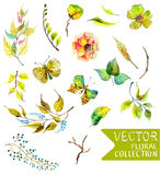 Watercolor flowers collection for different design. With natural floral elements and butterfly Stock Photography