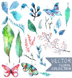 Watercolor flowers collection for different design. With natural floral elements and butterfly Stock Photos