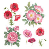 Watercolor flowers collection Royalty Free Stock Images