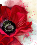 Watercolor flowers collection. Luxurious red poppy, closeup, on a background of splatter paint, watercolor illustration Stock Photography