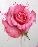 Watercolor flowers. Collection of roses. A luxurious collection of watercolor roses, with elements of splatter paint Stock Images