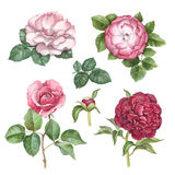 Watercolor flowers collection royalty free illustration