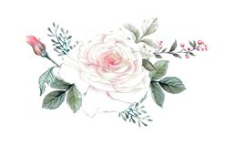 Watercolor flowers. floral illustration, Leaf and buds. Botanic composition for wedding or greeting card. Royalty Free Stock Photos