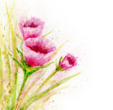 Watercolor flowers. royalty free illustration