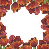 Floral frame of red tulips vector illustration