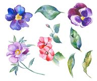 Watercolor flowers illustration Royalty Free Stock Image
