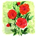 Watercolor flowers impression painting Royalty Free Stock Image