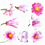 Watercolor Flowers Iris Blossoms Bell Flower Illustration Of Beautiful Red Pink Flowers Set Of Spring Stock Photography