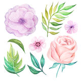 Watercolor flowers and leaves Stock Photo