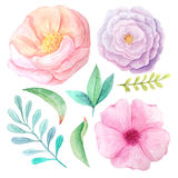 Watercolor flowers and leaves Royalty Free Stock Photos