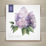 Watercolor flowers. Lilac. Watercolor artistic flowers. Lilac. Women`s day Royalty Free Stock Image