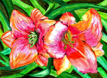 Watercolor flowers lilies painting impression fragment. Watercolor painting beautiful garden flowers lilies Stock Illustration