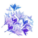 Watercolor flowers. Painting decorative element Stock Images