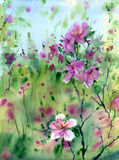 Watercolor flowers. Stock Images