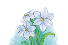 Watercolor flowers -. Watercolor painting, spring star flowers illustration Stock Image