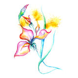 Watercolor flowers - pink iris, splashes, drops on paper or canvas,  Stock Image