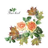 Watercolor flowers rose with leaves maple. Floral illustration on a white background. Watercolor  branch  floral pattern design illustration background orange Royalty Free Stock Image