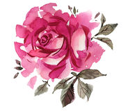 Watercolor flowers. Roses Stock Photo