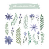 Watercolor flowers Royalty Free Stock Images