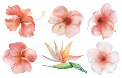 Watercolor flowers set. Tropical plant hand drawn illustration stock photo