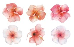 Watercolor flowers set. Tropical plant hand drawn illustration stock image