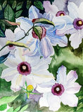 Watercolor flowers - white clematis Stock Images