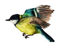 Watercolor flying Great tit Royalty Free Stock Photos