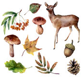 Watercolor forest set. Hand painted reindeer, mushrooms, fall leaves, pine cone, rowan, acorn isolated on white Stock Image