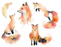Watercolor fox Animals illustration isolated on white background.