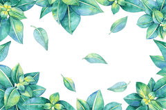 Watercolor Frame with Green Leaves Royalty Free Stock Image