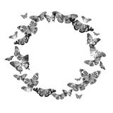 Watercolor frame with the image of transparent butterflies in black and white and gray colors on a white background.  Royalty Free Stock Image